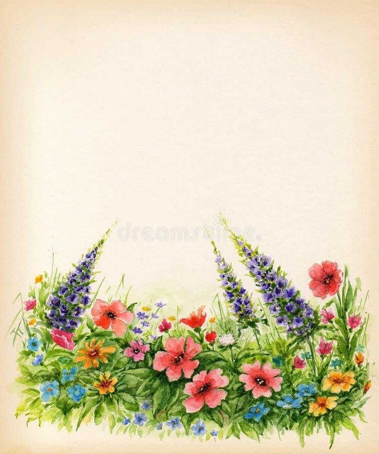 Gramado com os wildflowers no fundo branco Fundo floral da aquarela ilustração stock