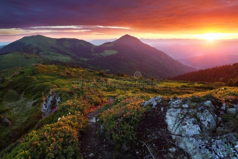 Gramado com pedras da fuga e pinhos de montanha Paisagem com nascer do sol bonito Céu fantástico, montanhas altas imagem de stock