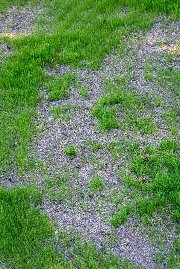 Gramado desigual e danificado, semeado sobre para repará-lo, com a mistura nova do crescimento, da semente e do seixo da grama fotos de stock