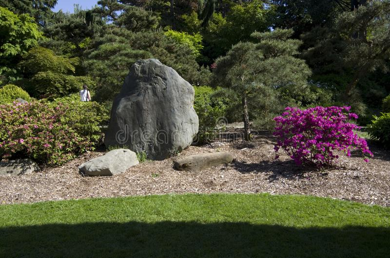 Gramado do projeto do quintal e rocha e árvores fotos de stock royalty free