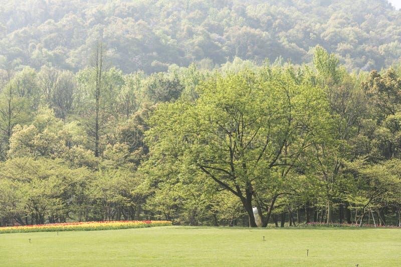 Gramado e árvores verdes imagens de stock
