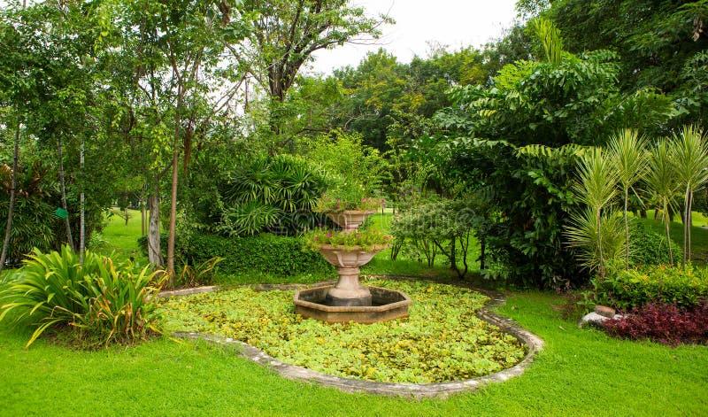Gramado e parque verdes das árvores imagens de stock royalty free