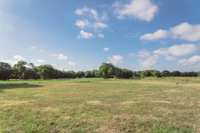 Gramado gramíneo do parque urbano verde bonito em Irving, Texas, EUA fotografia de stock royalty free