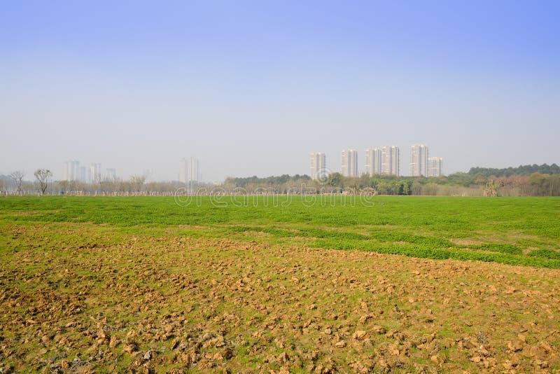 Gramado gramíneo perto da cidade moderna no meio-dia ensolarado do inverno fotografia de stock
