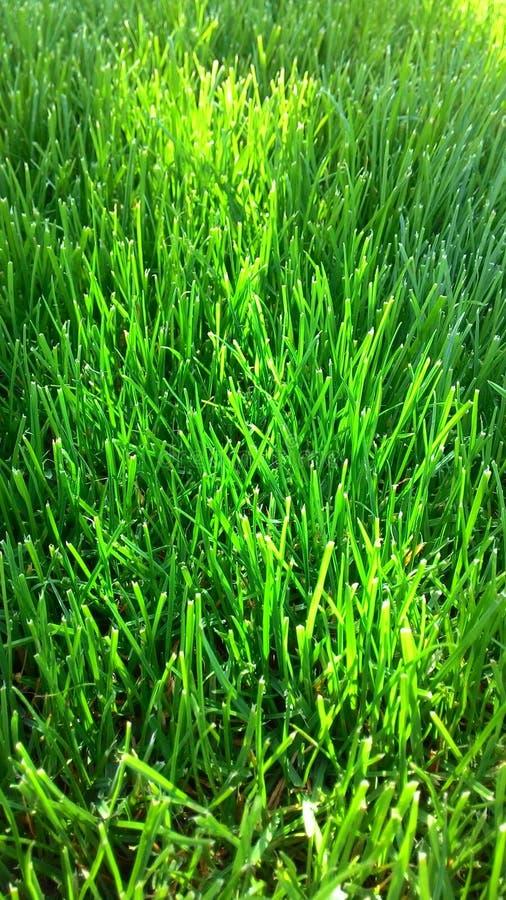 Gramado recentemente segado Grama verde fotografia de stock