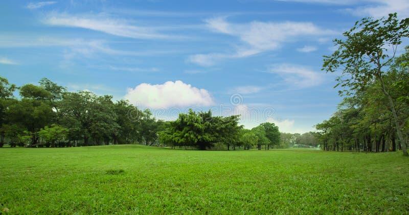 Gramado verde do parque da cidade fotografia de stock royalty free