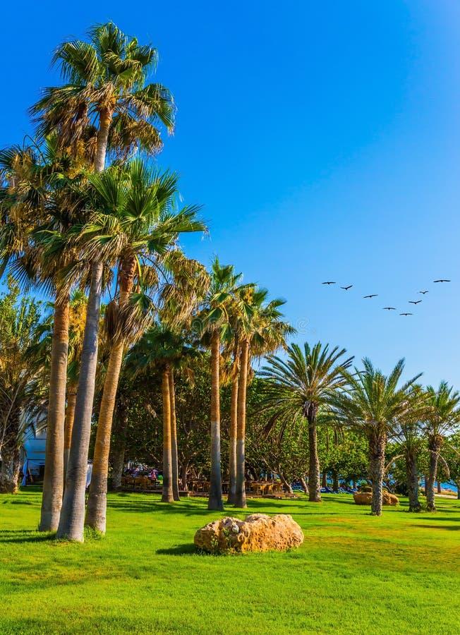 Gramados do bosque da palma e da grama verde imagens de stock royalty free