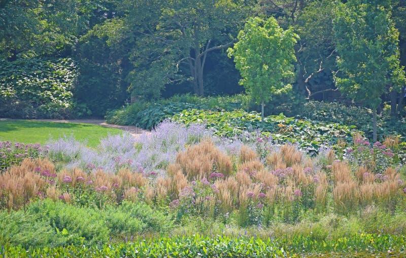 Gramas alaranjadas altas no jardim fotografia de stock royalty free