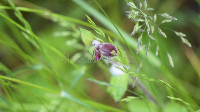 Gramas de prado bonitas da flor selvagem fotografia de stock