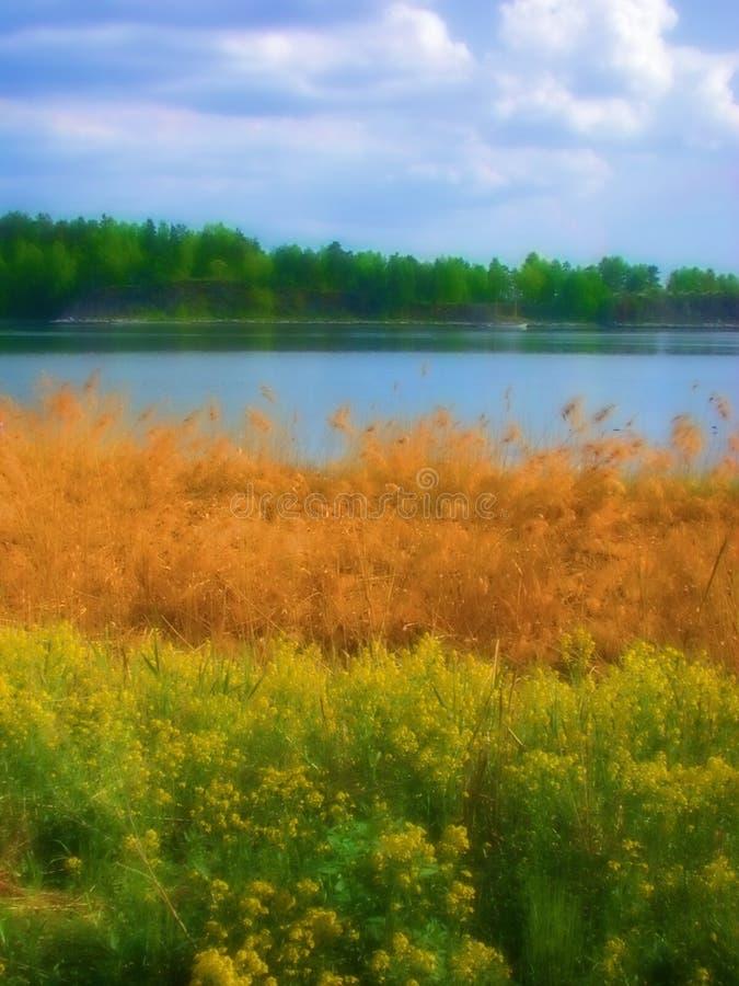 Gramas dos Wildflowers por Lagoa fotografia de stock royalty free