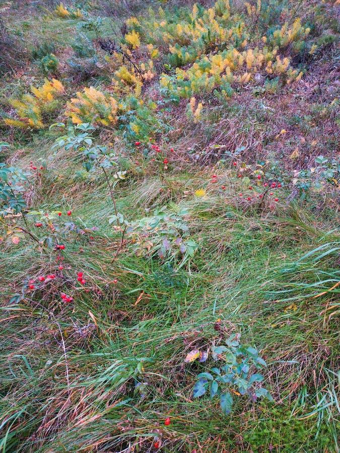Gramas selvagens em um campo no por do sol Paisagem bonita do outono imagens de stock royalty free
