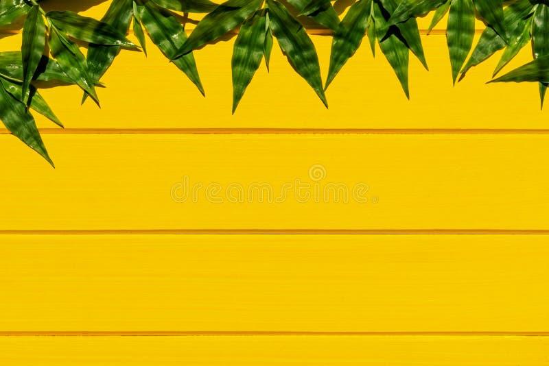 Gramas verdes tropicais na opinião superior do fundo de madeira amarelo imagens de stock royalty free