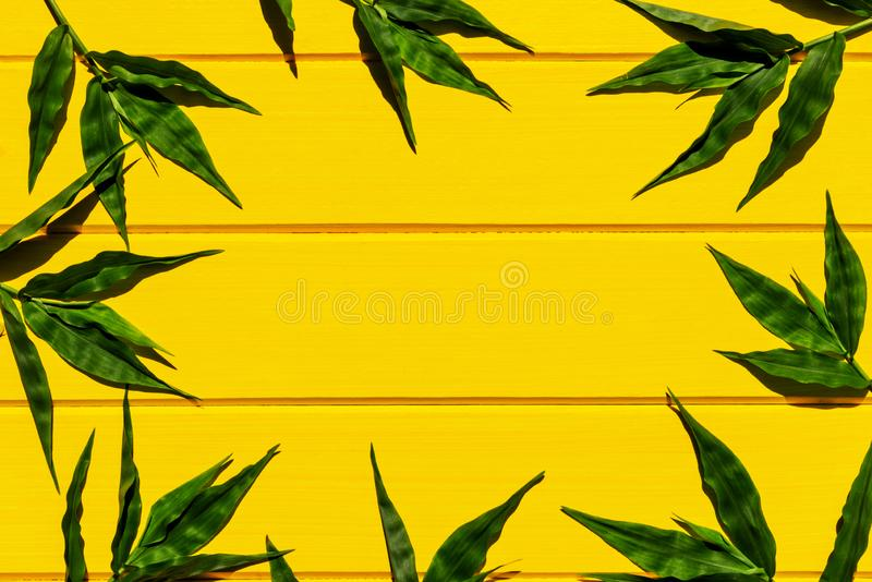 Gramas verdes tropicais na opini?o superior do fundo de madeira amarelo fotos de stock royalty free