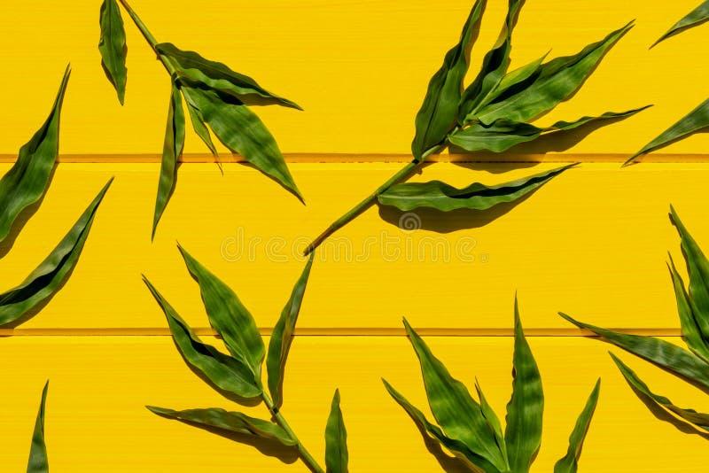 Gramas verdes tropicais na opini?o superior do fundo de madeira amarelo imagem de stock royalty free