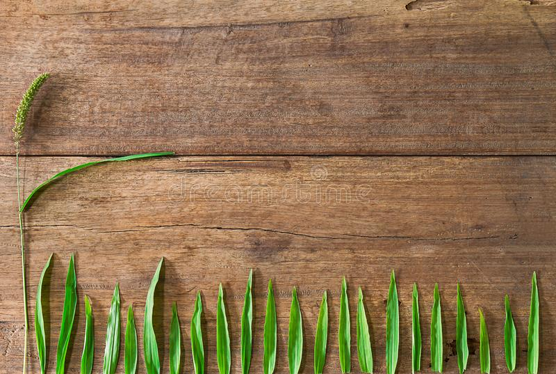 Grame as folhas da flor e do verde no fundo de madeira do vintage sujo do grunge fotografia de stock