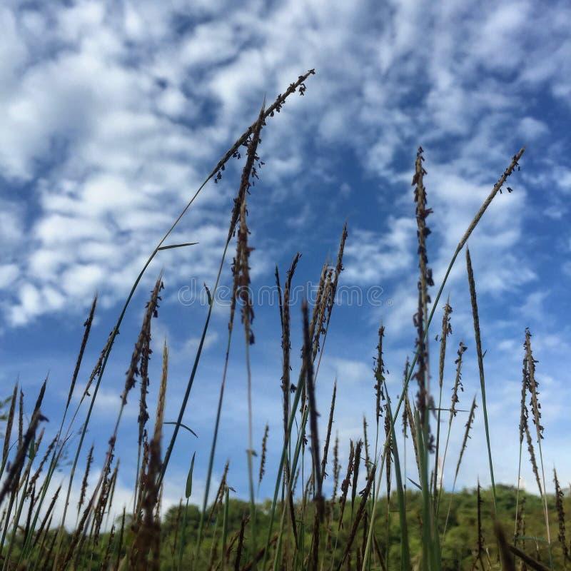 Download Grame a flor foto de stock. Imagem de azul, nuvens, nave - 107529252