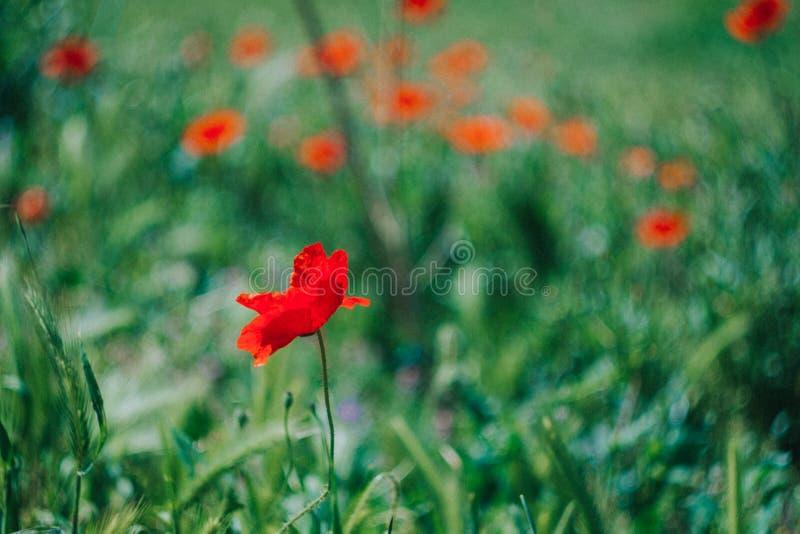 Grame a flor imagens de stock