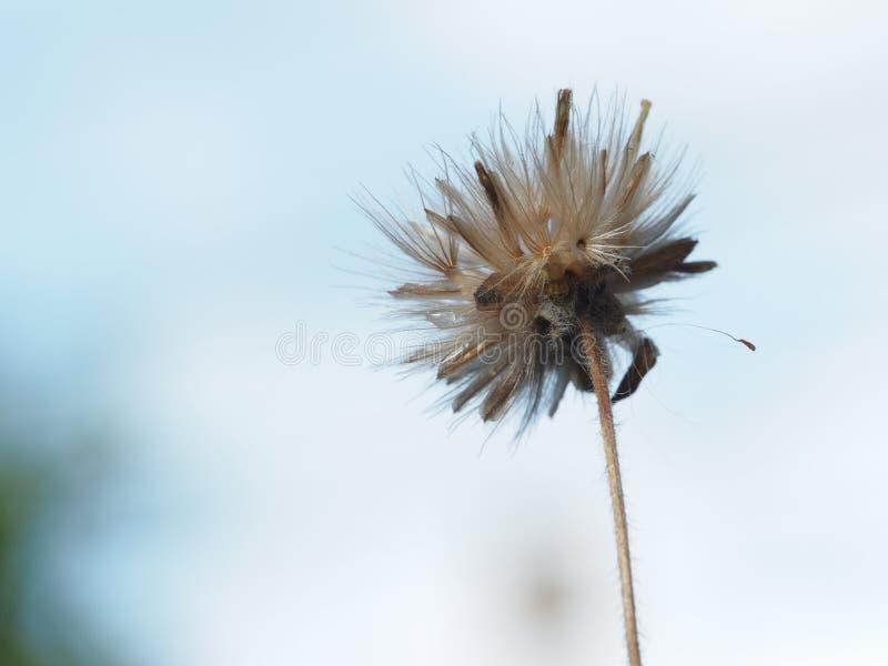 Grame a flor fotografia de stock