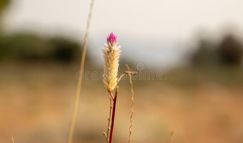 Grame a flor fotos de stock