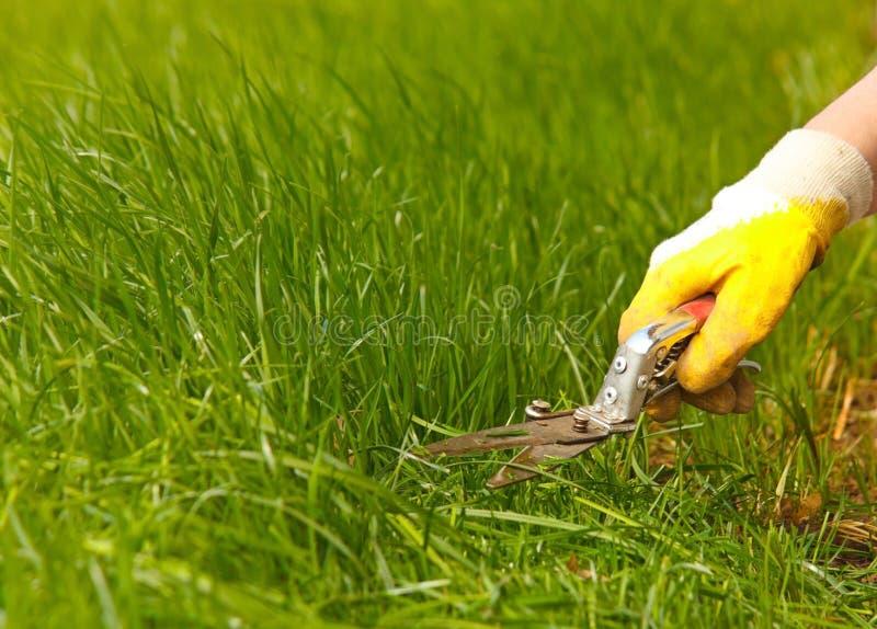 Grame o aparamento do gramado, a tesoura de jardim e a luva amarela imagens de stock