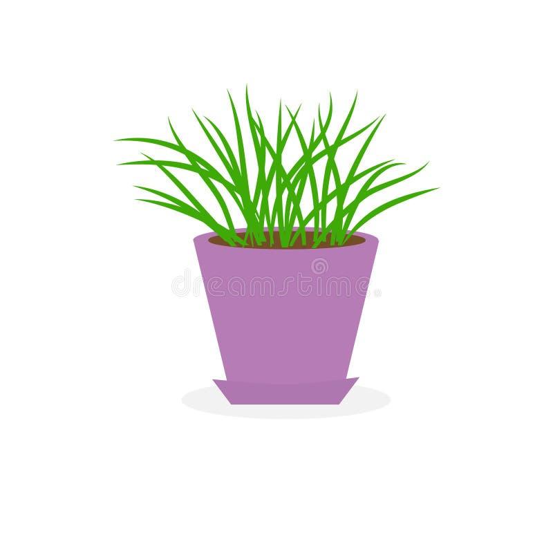 Grame o crescimento no projeto liso isolado do fundo branco do potenciômetro de flor o ícone violeta ilustração royalty free