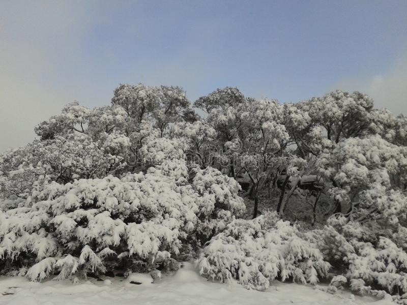 Grampians Australien snö Tid arkivfoto