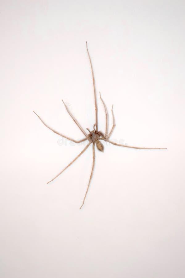 Gran araña en un fondo blanco imágenes de archivo libres de regalías