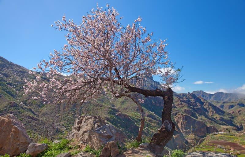 Gran Canaria, кальдера de Tejeda стоковые изображения rf