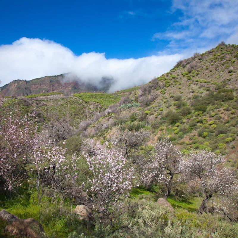 Gran Canaria, кальдера de Tejeda стоковые изображения
