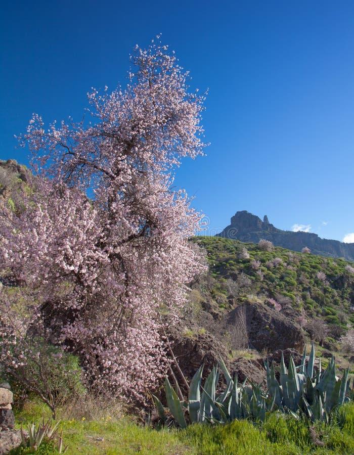Gran Canaria, кальдера de Tejeda стоковые фотографии rf