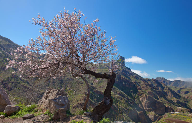 Gran Canaria, кальдера de Tejeda стоковые фото