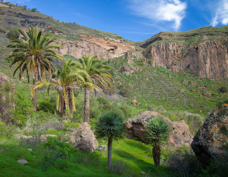 Gran Canaria, Calder de Bandama efter vinterregn royaltyfri bild