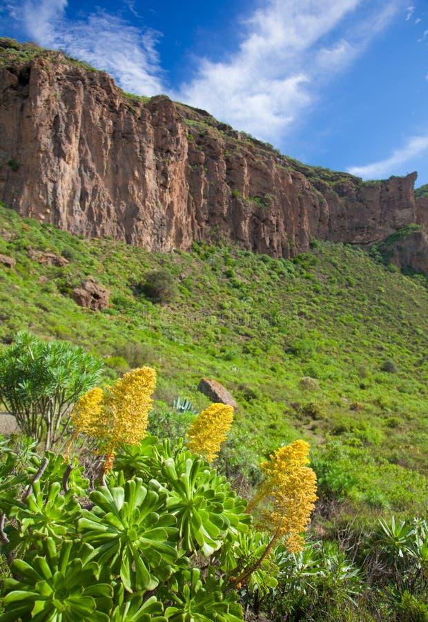 Gran Canaria, Caldera de Bandama nach Winter regnet lizenzfreies stockfoto