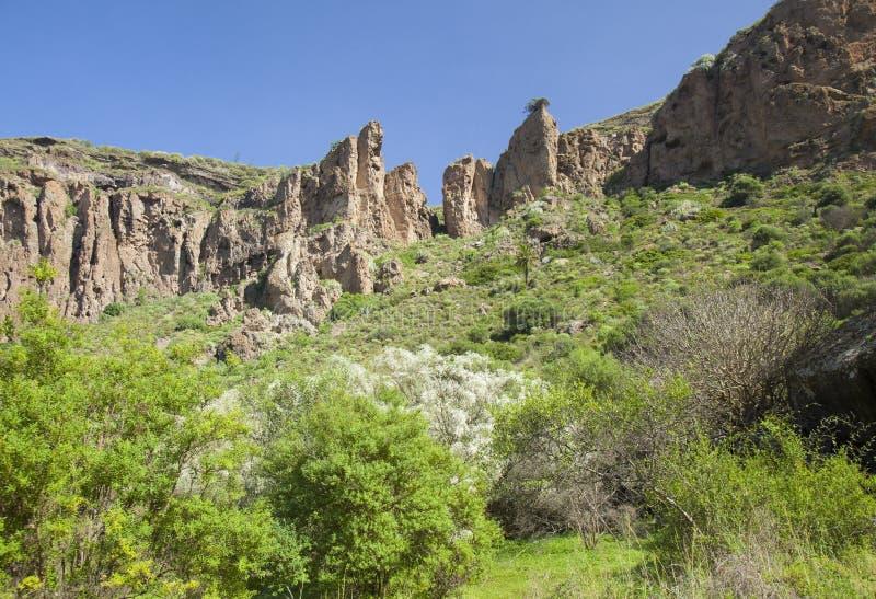 Gran Canaria, Caldera de Bandama, retama foto de stock royalty free