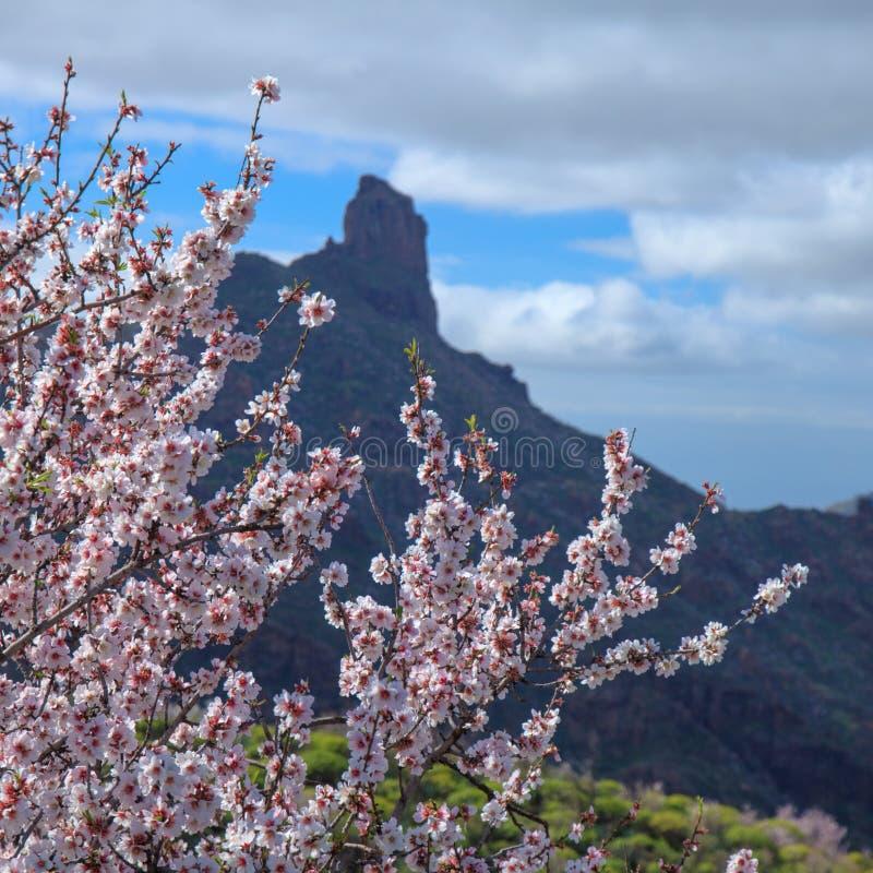 Gran Canaria, caldera de Tejeda fotografia stock libera da diritti
