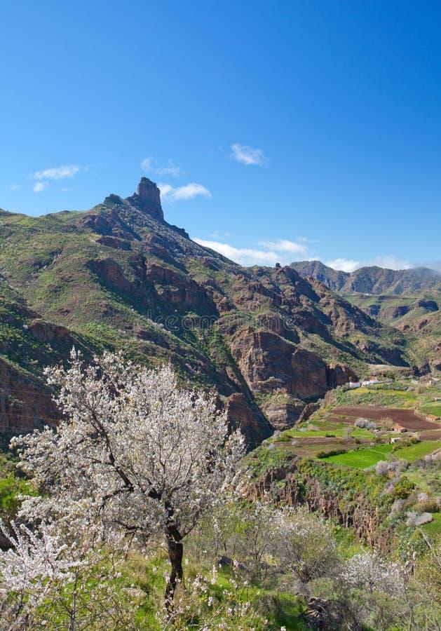 Gran Canaria, Caldera de Tejeda arkivbild