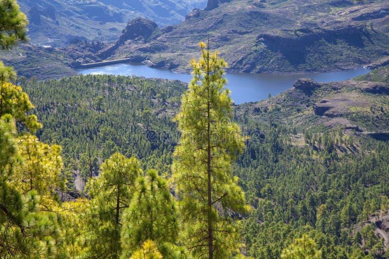 Gran Canaria, diciembre fotografía de archivo libre de regalías
