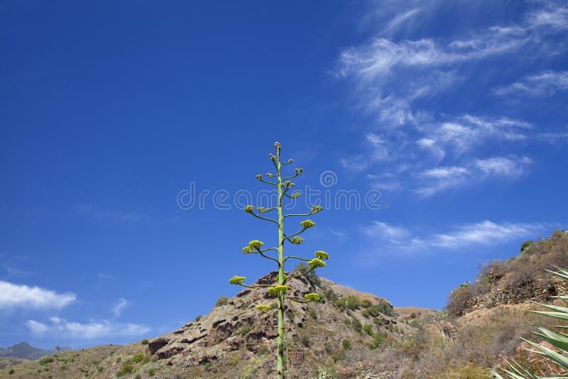 Gran Canaria, junio imagen de archivo