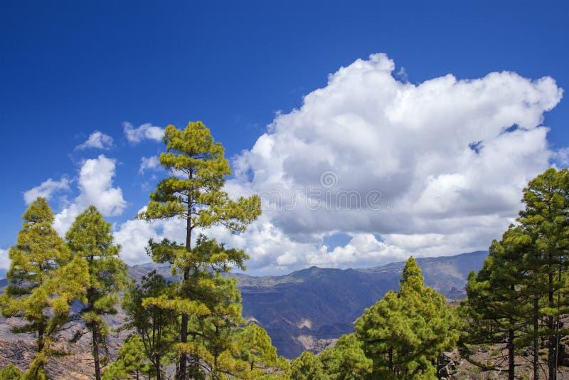 Gran Canaria, Maart stock afbeeldingen