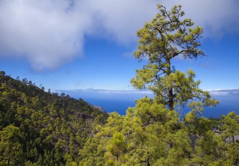 Gran Canaria, noviembre fotos de archivo libres de regalías