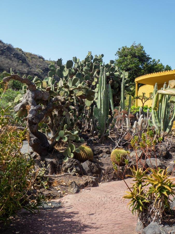 Cactus detail at the botanical garden on Gran Canaria, Canary Islands. Gran Canaria/Spain - August 9 2019: Jardín Botánico Canario Viera y Clavijo is the stock photography