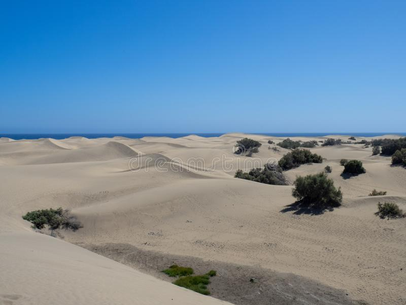 Sand dunes at Maspalomas, Gran Canaria. Gran Canaria/Spain - August 13 2019: Sand dunes at Maspalomas. Maspalomas is a tourist town in the south of the island of stock image