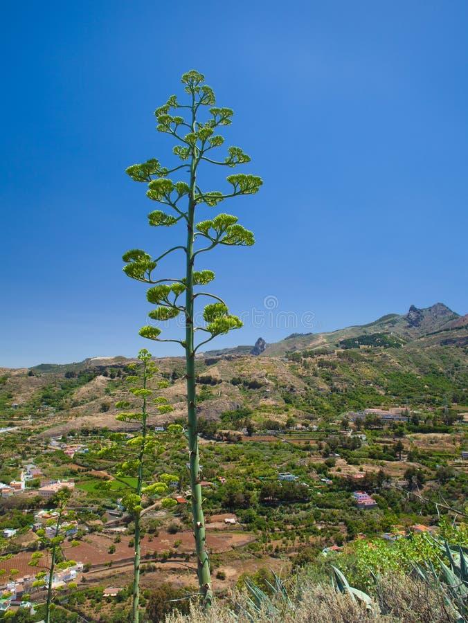 Gran Canaria, Vega de San Mateo fotografia stock