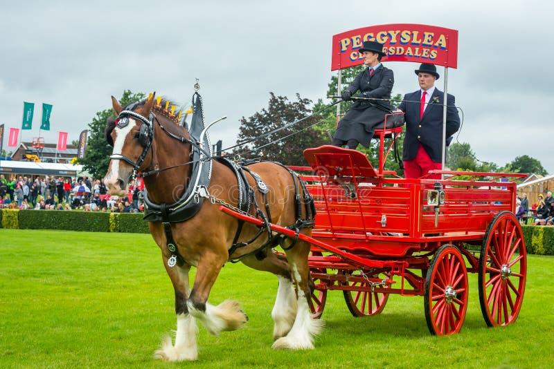 Gran demostración 2019, desfile pesado del caballo, caballo de Yorkshire de Clydesdale fotografía de archivo libre de regalías