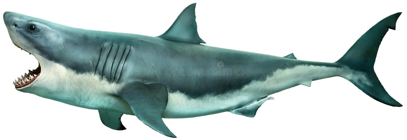Gran ejemplo de la vista lateral 3D del tiburón blanco libre illustration