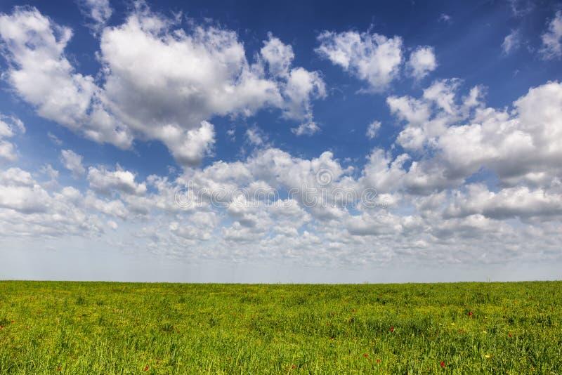 Gran estepa del Kazakh en primavera imagenes de archivo