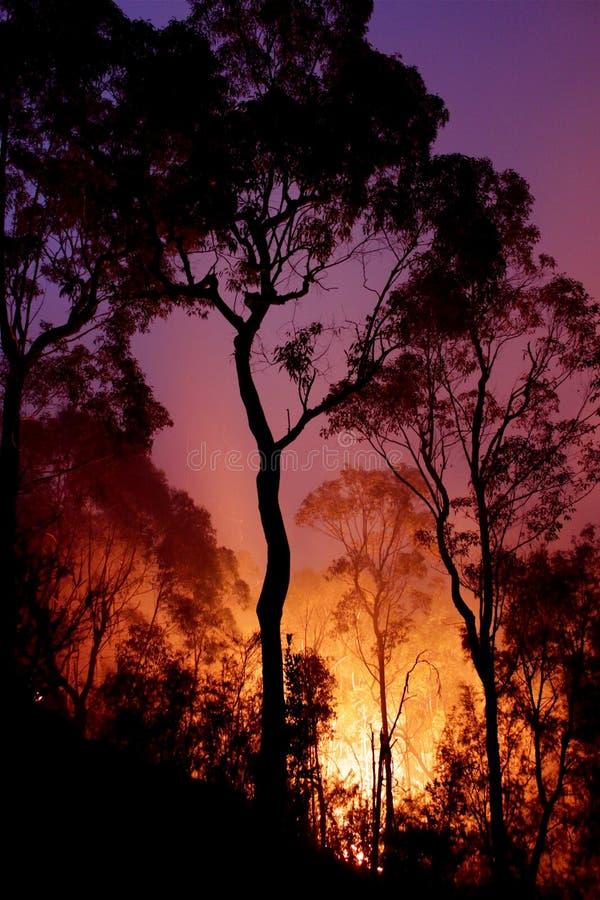 Gran incendio in aperta campagna entro Night fotografia stock