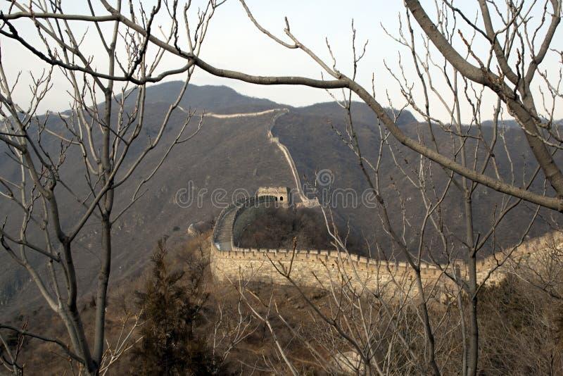 Gran Muralla de China a través de las ramas de árbol fotografía de archivo libre de regalías