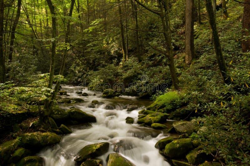 Gran parque nacional de las montañas ahumadas foto de archivo libre de regalías