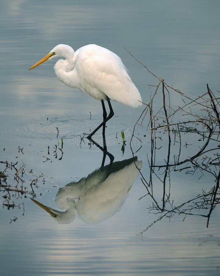 Gran pesca del Egret imágenes de archivo libres de regalías
